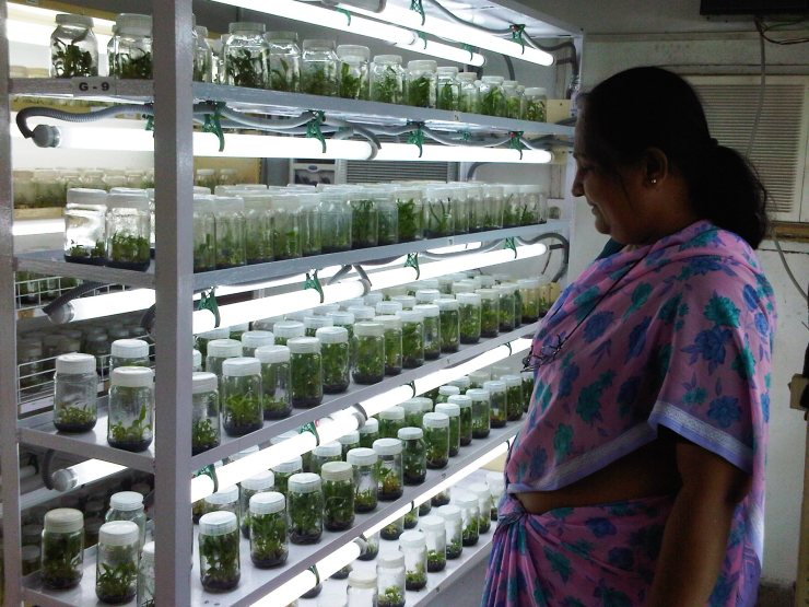 Thank you Dr. Aparajuta Mitra, for showing me your petri aloe and banana plants!