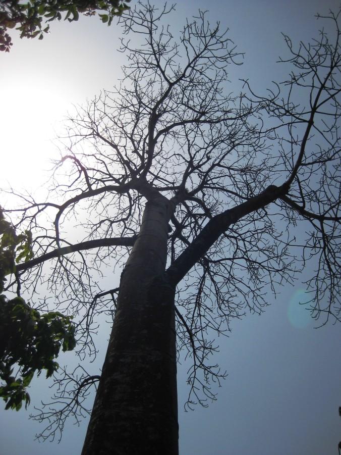 Same tree